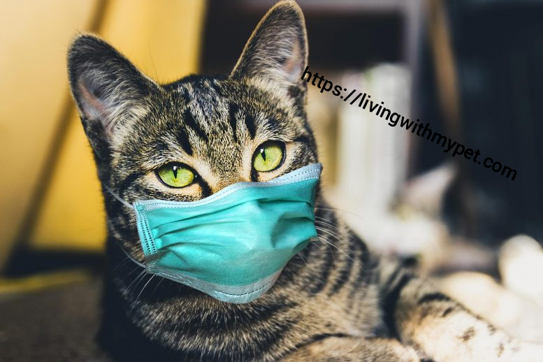 Coronavirus and Cats – What You Should Know