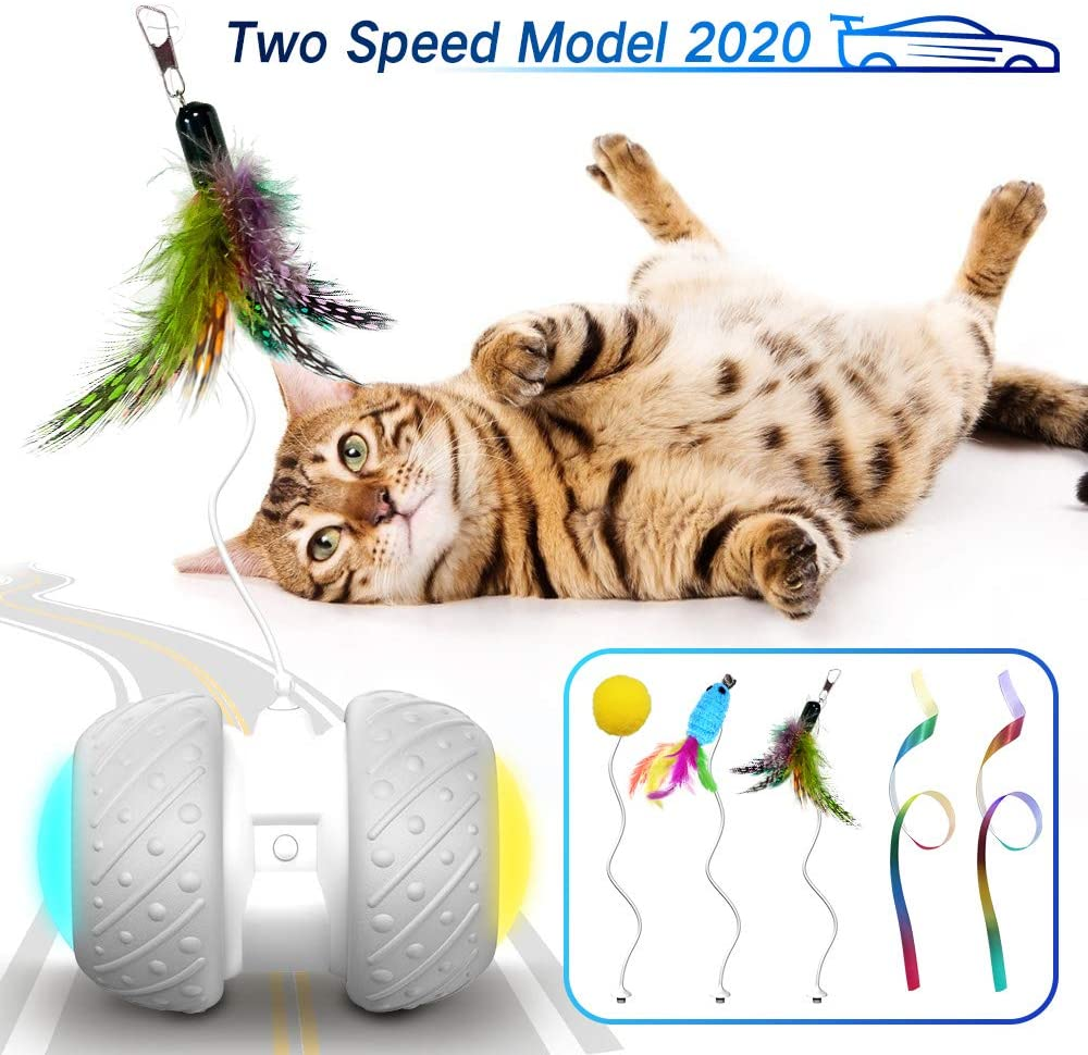 Best Motorized Cat toys