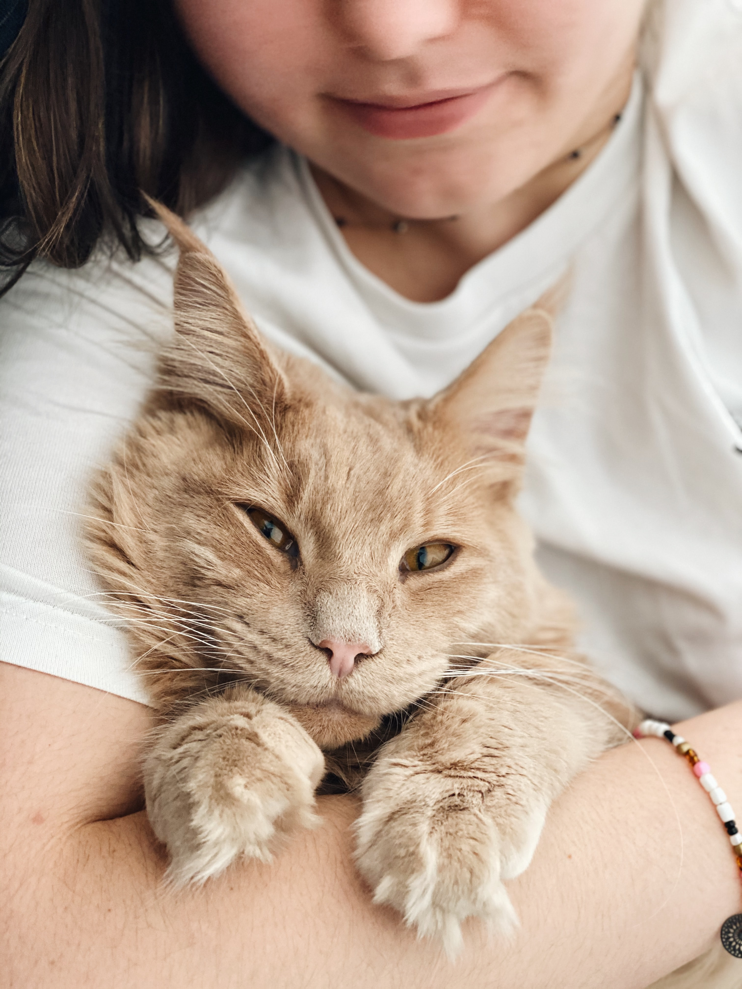 Pneumonia in cats and treatment