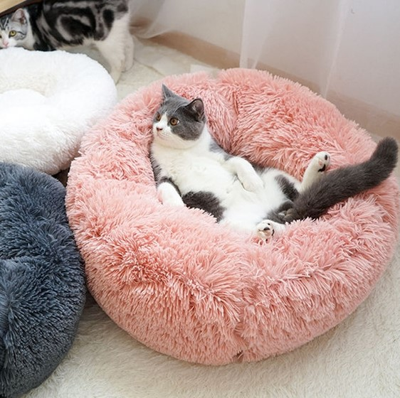 How to choose the best cat bed