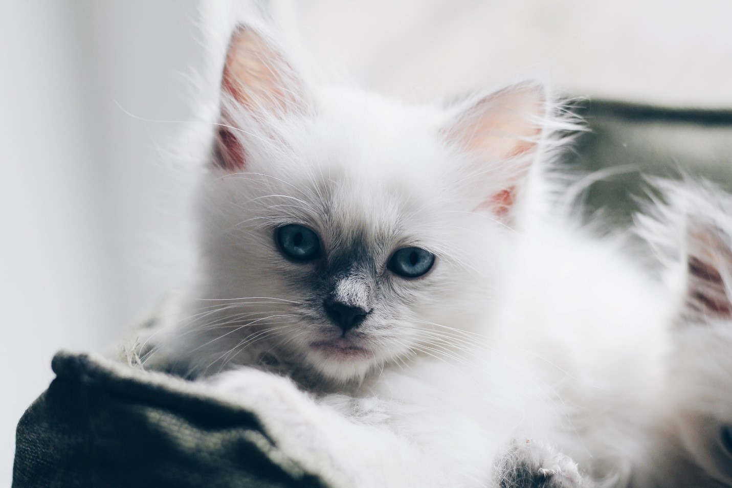 Best Cat Breeds to Keep