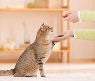 Best Cat Treats for Training
