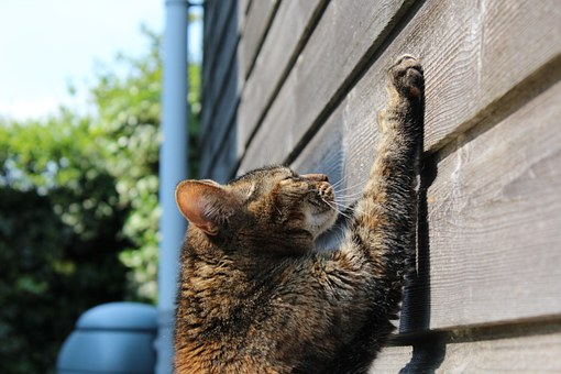Why Do Cat Scratch and How to Stop them from Scratching Furniture?