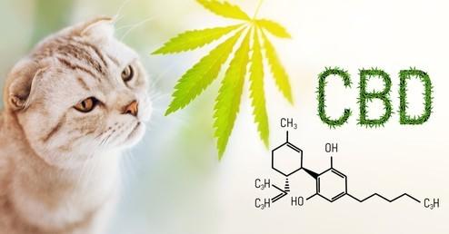 Top 10 Best CBD Cat Products